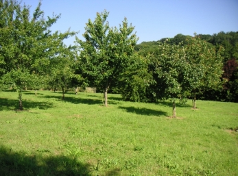 L'Huilerie Orchard